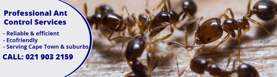 ant control cape town