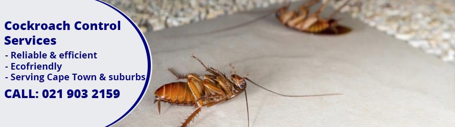 cockroach control cape town