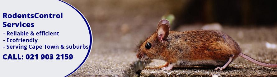 rat & rodent control cape town